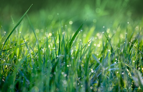 grass covered in dew in the morning