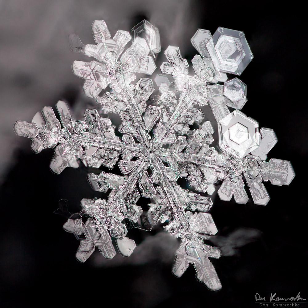 Don Komarechka Photography, Barrie Ontario » Tiny Wonder