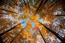 Fisheye Fall Colours