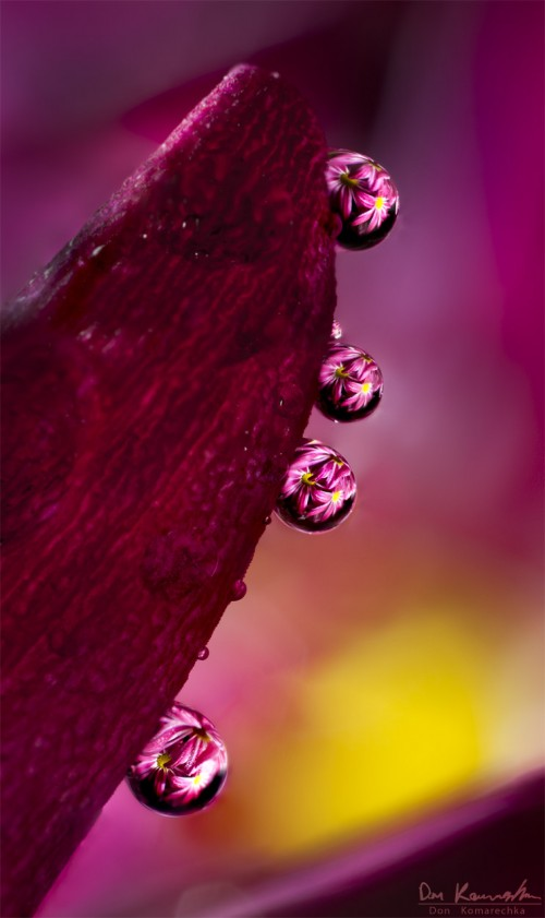 water droplets fracting an image of flowers