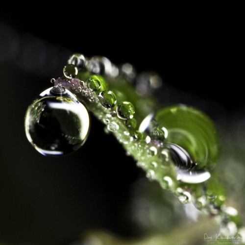 macro water droplets on a small plant