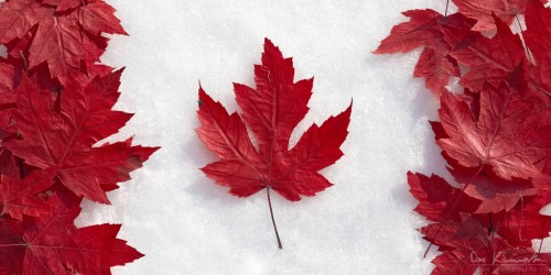 canada flag made of maple leaves on snow