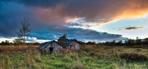 old sheds in an overgrown field at sunset
