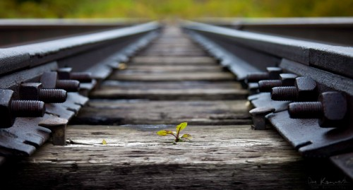 plant trying to grow through a train track