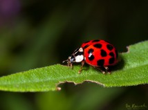 Life of a Ladybird