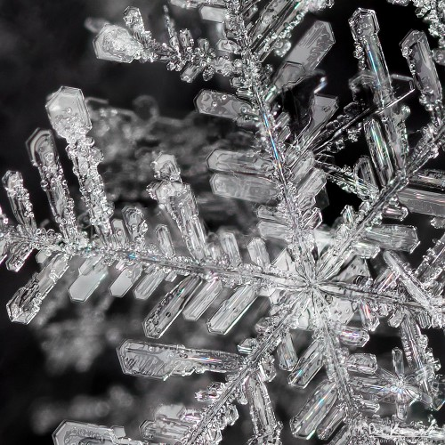 A close-up of a snowflake with many detailed branches that look like crystal blades.