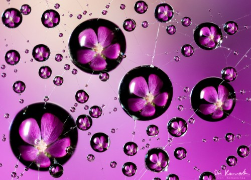 water droplets refracting an image of a flower