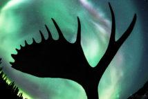 Yukon Silhouette