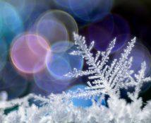 Frost Fantasy
