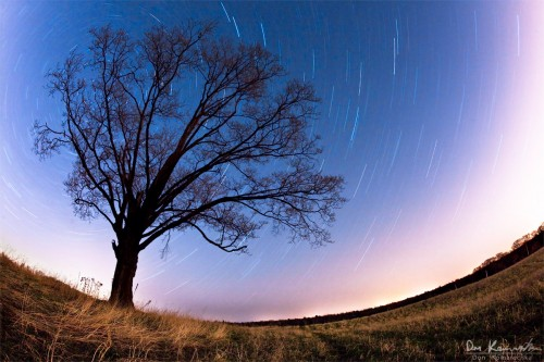 fisheye star trail photo of a tree in a field