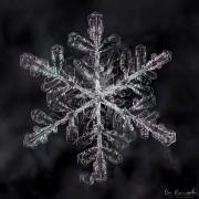 Shimmering Snow